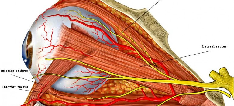 Cranial Nerve Palsies